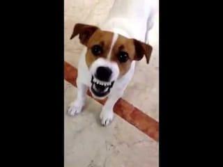 Macerata, il cane abbaia tutta la notte: proprietario condannato a un mese di reclusione