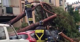 Maltempo sull'Italia: alberi caduti, strade chiuse e blackout a Palermo, 8 feriti a Lauria