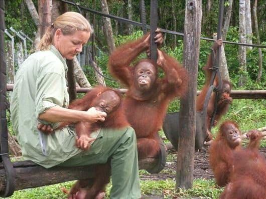 Lone Droscher–Nielson nel rifugio per orangutan