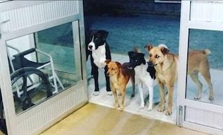 Senzatetto al pronto soccorso, i suoi adorati cani lo aspettano per ore fuori dalla porta