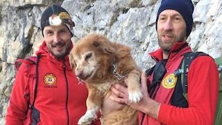 Cane di 17 anni cade in un dirupo di 30 metri: salvato dagli angeli del Soccorso Alpino