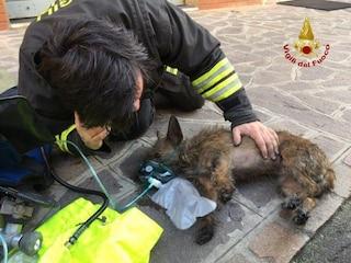 Incendio in un appartamento a Bologna, cagnolino salvato con la maschera dell'ossigeno