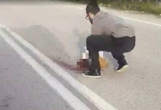 Cagnolino investito e ucciso da un'auto, padrona sviene e il marito aggredisce conducente