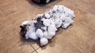 USA. Gatto congelato in un blocco di neve: il salvataggio è miracoloso
