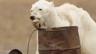 Russia, 52 orsi rischiano di morire di fame e assaltano un villaggio
