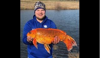 Cattura un pesce rosso di 20 chili con un biscotto come esca