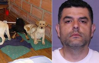 Cuccioli di cane imbottiti di droga per passare la frontiera, veterinario condannato