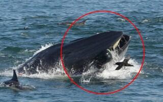 """Pescatore di aragoste viene inghiottito intero da una balena: """"Era buio, ho pensato di morire"""""""