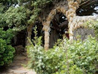 """Il """"nonno"""" sardo di Greta Thunberg: storia del poeta ambientalista che abitò un albero per salvarlo"""