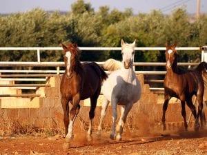 Chieti, per far vincere il loro cavallo gli somministravano cocaina: la scoperta dopo una gara