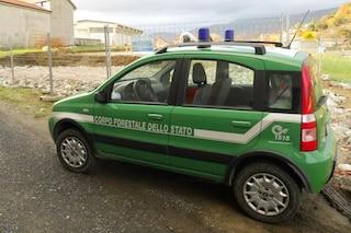 Forestali, la Corte costituzionale conferma: è legittimo l'assorbimento nei carabinieri