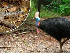 il suo uccello era così grande ebano equitazione grande nero pene