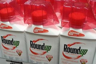 """Nuova sconfitta per Bayer sui diserbanti Monsanto: """"Paghi 2 miliardi"""""""