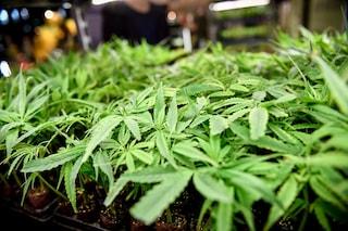 """Dalla Cassazione stop alla vendita della cannabis light. Salvini esulta: """"Contro qualsiasi droga"""""""