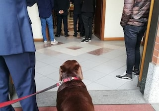 Torino, no al cane in chiesa per il funerale del padrone: l'animale assiste dall'esterno