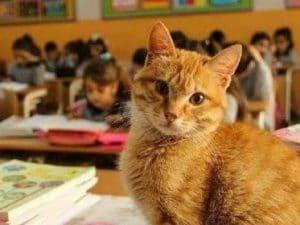 Gattino smarrito entra a scuola: bidello lo uccide a bastonate davanti ai bimbi di una elementare