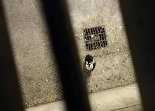 Torino, gattino rimane intrappolato ma nessuno può liberarlo perché palazzo è sotto sequestro