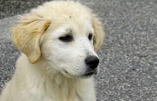 Biella, cucciolo di sei mesi ucciso a bastonate nel giardino per rubare oggetti da pochi euro