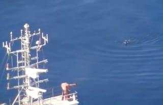 Sea Watch, il video-denuncia: migrante si tuffa in mare per sfuggire alla Guardia Costiera libica