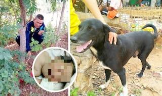 Cane disabile salva neonato sepolto vivo dalla madre 15enne: Ping Pong ora è un eroe