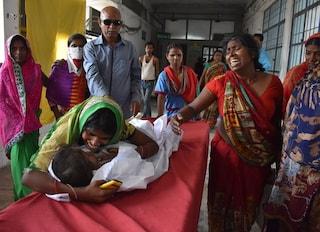 India, oltre 50 bimbi morti per encefalite acuta dopo aver mangiato il frutto tropicale litchi