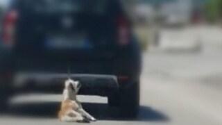 Cane legato a un'auto e trascinato per chilometri sull'asfalto