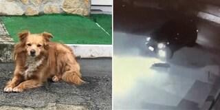 Lecce, follia nel piazzale: vede un cane, lo investe con l'auto e ci ripassa sopra
