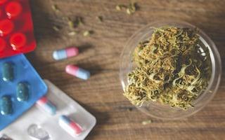Perché le multinazionali dell'alcol e dei farmaci si oppongono alla legalizzazione della cannabis