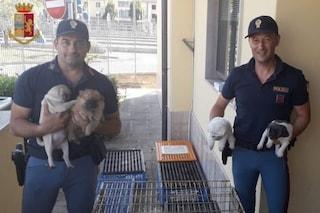 Arezzo, viaggiava in A1 con 53 cuccioli di cane in auto: animali salvati dalla polizia