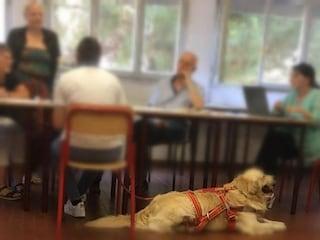 Non riesce a parlare in pubblico: Serena fa l'esame di maturità con il cane da salvataggio accanto