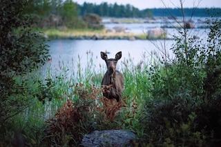 """""""Affitta un finlandese"""": vacanze gratis in Finlandia per imparare a essere felici"""