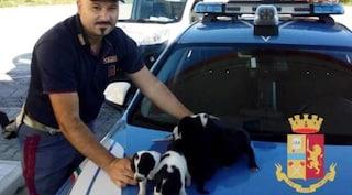 Pescara, cagnolini abbandonati in superstrada seminano il panico: salvati dopo un'ora