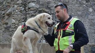 Addio Scott, è morto il cane eroe dei soccorsi ad Amatrice: aveva 13 anni