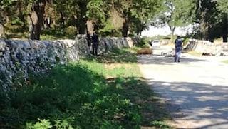 Bari, in moto si schianta con una mucca ferma sulla strada. Donato muore a 50 anni