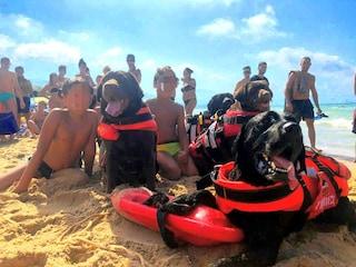 Rischiano di annegare ad Alcamo Marina: 3 bambini salvati da 4 cani bagnino