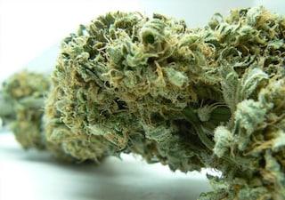 """""""Mi vendevano cannabis con il metadone e sono diventata una tossica a 15 anni"""""""