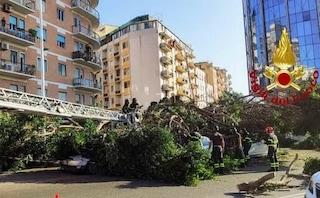 Cagliari, grosso albero cade sulle auto: intrappolati in un veicolo mamma e figlioletto