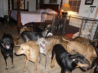 Bahamas, donna accoglie 97 cani in casa per salvarli dall'uragano Dorian