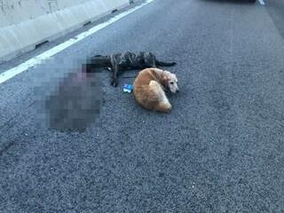 Auto travolge due cani a Sassari. Lei muore, lui le resta accanto: le foto strazianti su Facebook