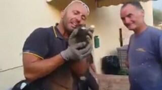 """Massa, pompiere in lacrime dopo aver salvato la gattina, video è virale: """"Non me ne vergogno"""""""