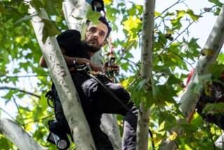 """Parigi, vive da giorni su un platano per protesta: """"Da pazzi tagliare gli alberi, ci danno ossigeno"""""""