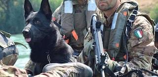 Assistenza veterinaria gratis per i cani soldato dopo il congedo, appello dei militari italiani