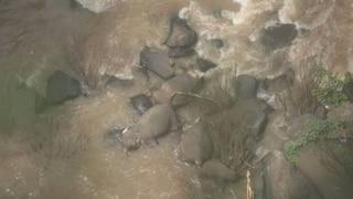 Elefantino scivola da scogliera, 10 elefanti muoiono con lui cadendo nel vuoto per salvarlo