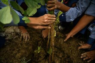 """Terramadre, arriva l'agenda d'autore ed ecologica: """"Con il ricavato 100 nuovi alberi"""""""