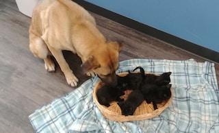 L'eroica impresa della cagnolina randagia: trova 5 gattini e li salva dalla neve col corpo