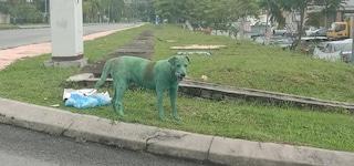 """Cane randagio cerca cibo, bulli lo imbrattano di vernice verde: """"E' velenosa, ora rischia la vita"""""""