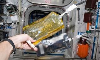 Sulla Stazione spaziale internazionale tutti i bagni fuori uso