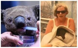Addio a Lewis: è morto il koala salvato da una donna dalle fiamme in Australia