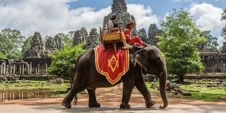 Cambogia, stop ai tour sugli elefanti verso i celebri templi di Angkor Wat: vittoria animalista