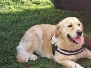 Addestrata per salvare gli uomini, la cagnolina Frida avvelenata al parco da mano umana